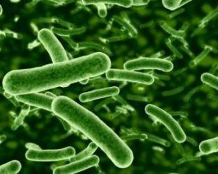 Analiza i badanie mikrobiologiczna wody